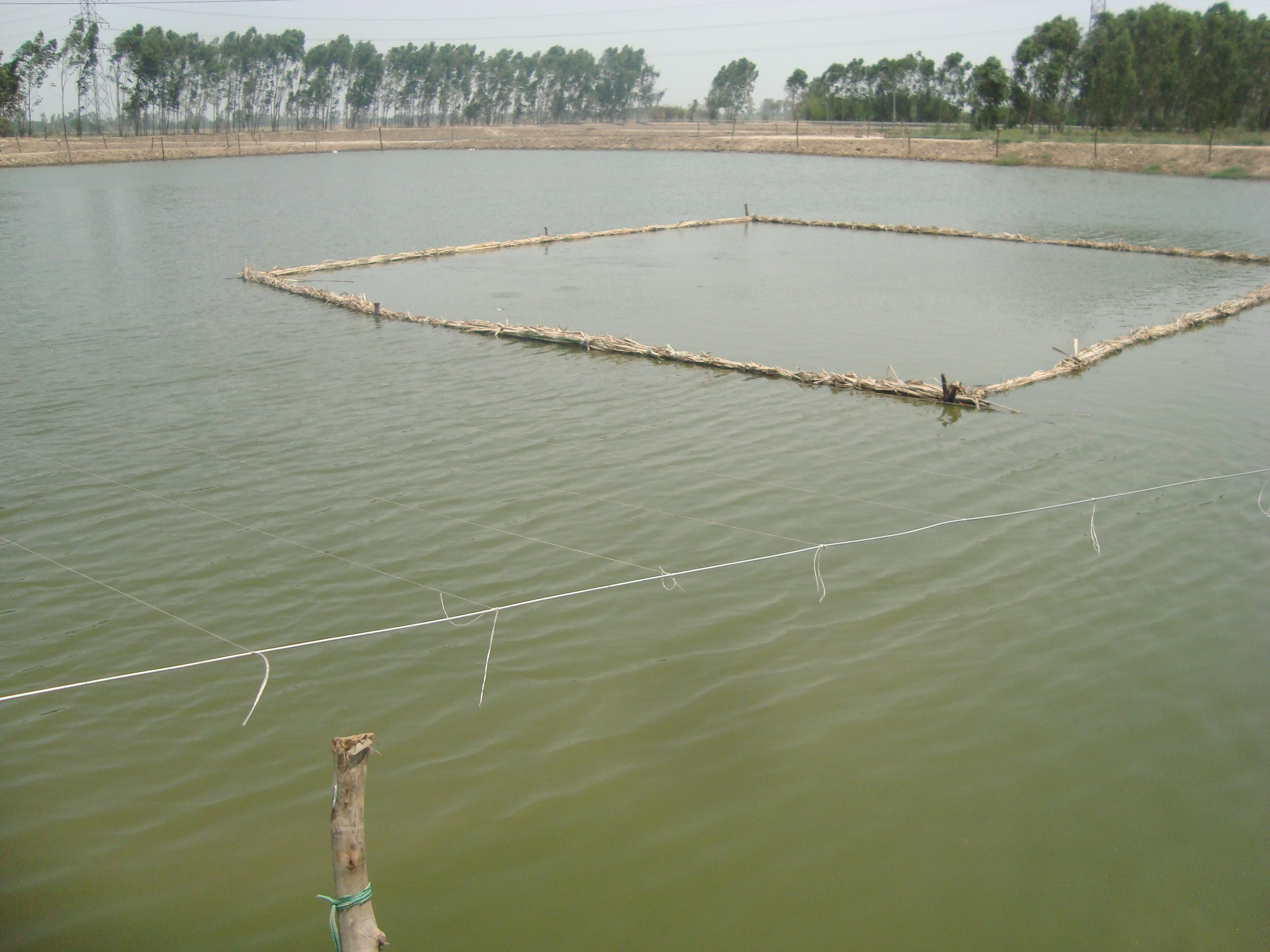 Progressive Fish Farmer Raj Kumar Sets Example for the Debit